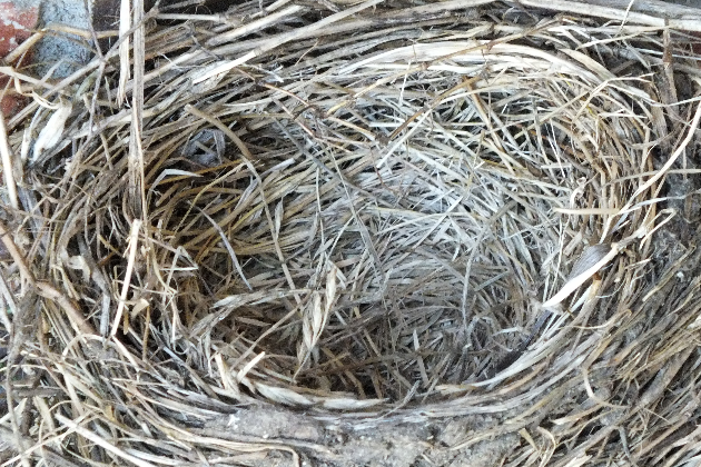 Blockage & Bird Nest Removal